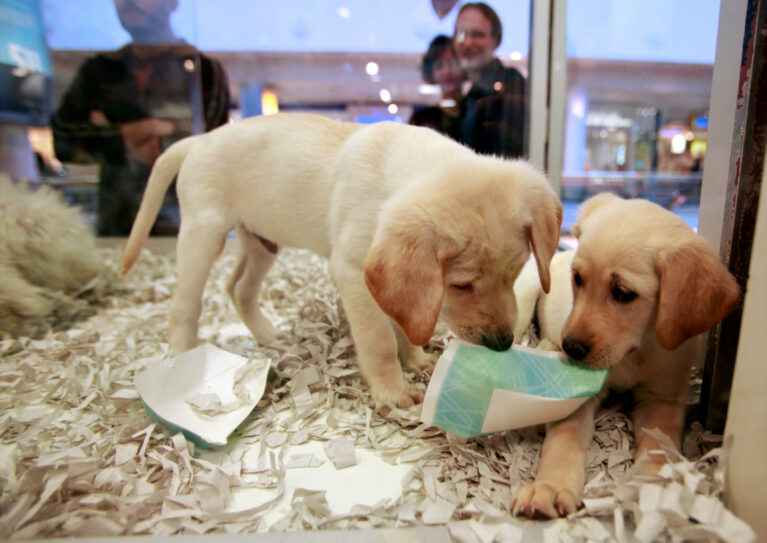 How to sell pets online to reach more customers